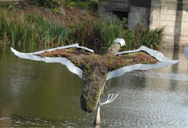 Category Preview - SWANS OF TRENTHAM